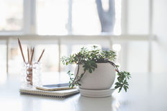 Home plant, business notepad and smartphone in backlight. Home plant, business notepad and smartphone on the table in a backlight with copy space stock photo