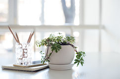 Home plant, business notepad and smartphone in backlight. Home plant, business notepad and smartphone on the table in a backlight with copy space royalty free stock photos
