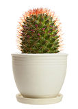 Home plant cactus Stock Images
