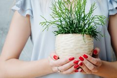 Home plant care hobby woman hold succulent. Home plant care. Hobby concept. Woman holding flowerpot with succulent stock photos