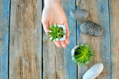 Home plant decor background. Girl holds succulent plant in her hand on a wooden background. stock photography