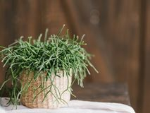 Home plant decor design flowerpot houseplant royalty free stock images