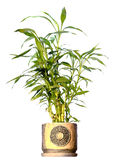 Home plant in flowepot stock images