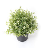 Home plant in pot. On white background stock photo