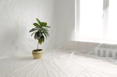 Home plant Stock Images