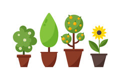 Home plant and tree  illustration. Royalty Free Stock Image