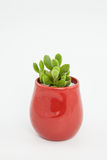 Home planted green succulent plant Stock Photos