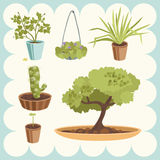 Home Plants. Illustration of Various Home Plants Stock Illustration