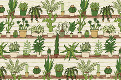 Home plants cactus pattern Stock Image
