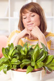 Home plants care Stock Image