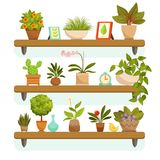 Home plants and decorative flowers in pots, standing on the shelves. Garden flowerpot and green interior house. Vector illustration royalty free illustration
