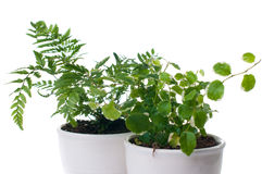 Home plants with green leaves Royalty Free Stock Photos