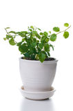 Home plants with green leaves Stock Photography