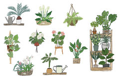 Home plants pattern Stock Photos