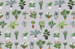 Home plants pattern Royalty Free Stock Image