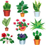 Home plants photo realistic set Stock Images