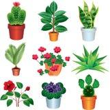 Home plants photo realistic set Stock Images