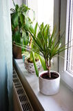 Home plants Royalty Free Stock Photos