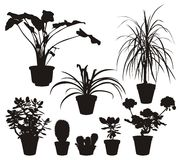 Home Plants Silhouettes Stock Images