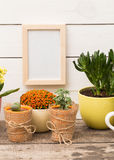 Home plants Royalty Free Stock Photo