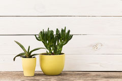 Home plants Stock Images