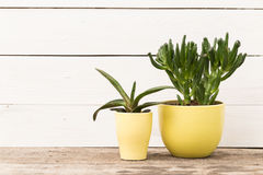 Home plants Royalty Free Stock Images