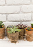 Home plants Royalty Free Stock Image