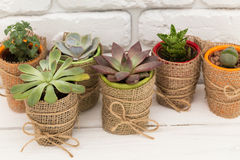 Home plants Royalty Free Stock Photography
