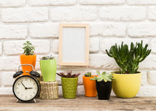 Home plants Stock Photography