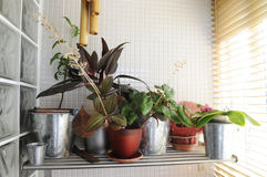 Home Plants by the Window - Sunny Interior Royalty Free Stock Photography