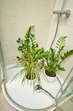 Home pot plants watering under shower Stock Photos