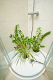 Home pot plants watering under shower Stock Images