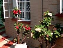 Home. Potplant decoration  flowers  home  cozy Stock Photo