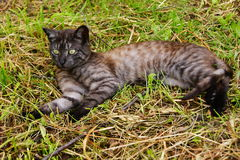 Home predator. The cat is lying on the ground, the animal, the hunter is resting, nature, summer, season, Home predator Stock Image