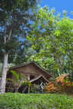 Home in the rainforest Royalty Free Stock Photos