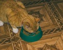 Home red cat eats food Stock Photos