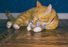 Home red cat plays with a toy Royalty Free Stock Photography