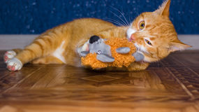 Home red cat plays with a toy Royalty Free Stock Photo