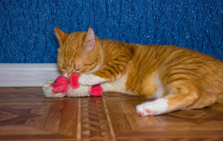 Home red cat plays with a toy Royalty Free Stock Images