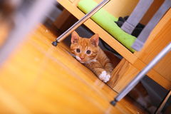 At home. red cute little cat pet kitty on floor Royalty Free Stock Images