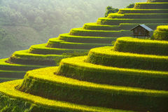 Home on the rice terrace tu le. Vietnam stock photos