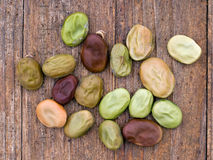 Home-saved broad bean, fava, seed for spring sowing Royalty Free Stock Photography