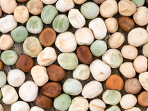Home-saved pea seed for spring sowing Stock Image