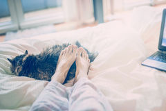 Home scene in bed . Female feet lying on a sleeping cat Stock Photos