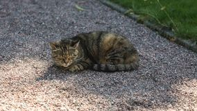 Home shorthair cat, dozing in the park. On a sunny day stock images
