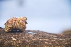 home snails fotografering för bildbyråer