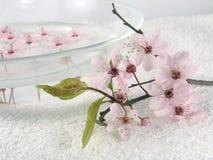 Home spa - een litteroze bloeit stock foto