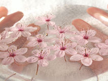 Home spa - a litte pink flowers Stock Image