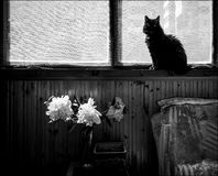 Home still life with a black cat. An ordinary balcony and a black cat. Home interior stock image