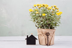 Home sweet home - beautiful  flowers in pot Royalty Free Stock Photo